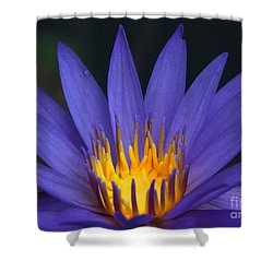 Purple And Yellow Water Lily Shower Curtain by Sabrina L Ryan