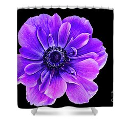 Purple Anemone Flower Shower Curtain by Mariola Bitner