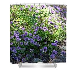 Purple Bachelor Button Flower Shower Curtain