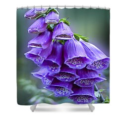 Purple Bell Flowers Foxglove Flowering Stalk Shower Curtain