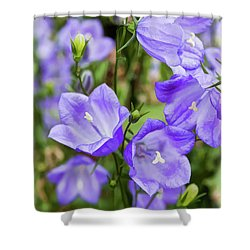 Purple Bell Flowers Shower Curtain