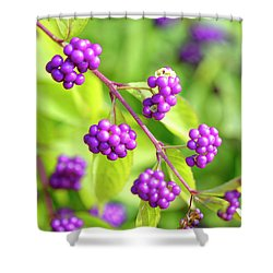 Purple Berries Shower Curtain