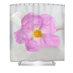 Purple Bloom Shower Curtain
