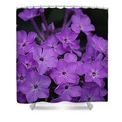 Purple Blossoms Shower Curtain by David Lane