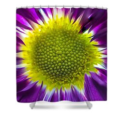Purple Burst Shower Curtain