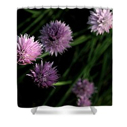 Purple Chives Shower Curtain by Angela Rath
