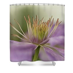 Purple Clematis Macro Shower Curtain