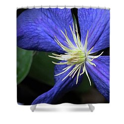 Shower Curtain featuring the photograph Purple Clematis by Rebecca Overton
