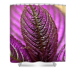 Purple Coleus Shower Curtain by Carolyn Marshall