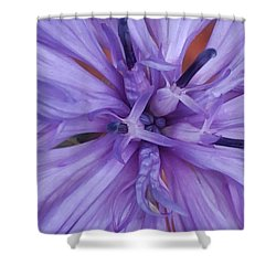 Purple Colorado Wildflower In Macro Shower Curtain