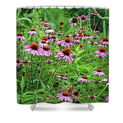 Purple Coneflower  Shower Curtain by Eva Kaufman