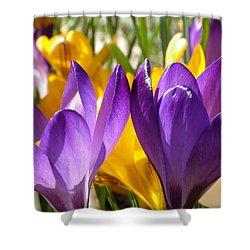 Purple Crocuses Shower Curtain
