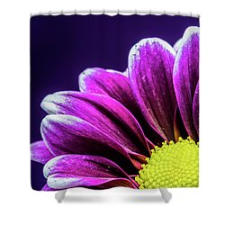 Purple Daisy Being Shy Shower Curtain