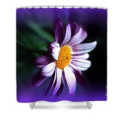 Shower Curtain featuring the photograph Purple Daisy Flower by Susanne Van Hulst