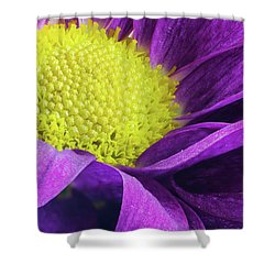Purple Daisy In The Garden Shower Curtain