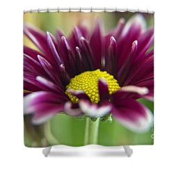 Purple Daisy Shower Curtain