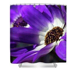 Purple Daisy Shower Curtain by Sabrina L Ryan