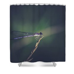 Shower Curtain featuring the photograph Purple Damsel by Shane Holsclaw