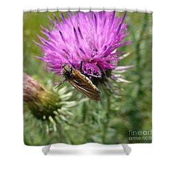 Purple Dandelions 1 Shower Curtain