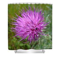 Purple Dandelions 2 Shower Curtain by Jean Bernard Roussilhe