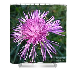 Purple Dandelions 3 Shower Curtain by Jean Bernard Roussilhe