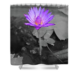 Purple Enlightened Lotus Shower Curtain