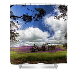 Shower Curtain featuring the photograph Purple Fields by Douglas Barnard