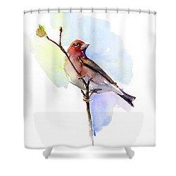 Purple Finch Shower Curtain