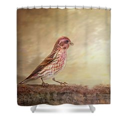 Purple Finch Walks The Line Shower Curtain