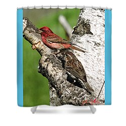 Purple Finches Shower Curtain by John Selmer Sr