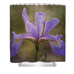 Purple Flag Iris Shower Curtain by Patti Deters