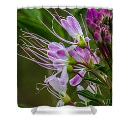 Purple Flower 6 Shower Curtain
