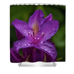 Purple Flower 7 Shower Curtain by Timothy Latta