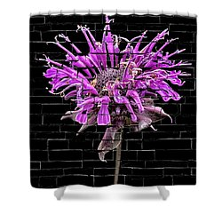 Purple Flower Under Bricks Shower Curtain