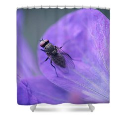 Purple Fly Shower Curtain