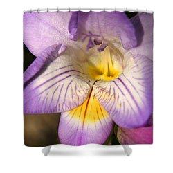 Purple Fresia Flower Shower Curtain