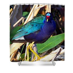 Shower Curtain featuring the photograph Purple Galinule 001 by Chris Mercer