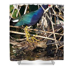 Shower Curtain featuring the photograph Purple Galinule  by Chris Mercer