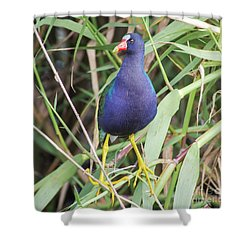 Shower Curtain featuring the photograph Purple Gallinule by Robert Frederick