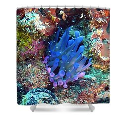 Purple Giant Sea Anemone Shower Curtain