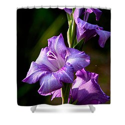 Purple Glads Shower Curtain by Christopher Holmes