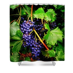 Grapes Shower Curtain by Greg Mimbs