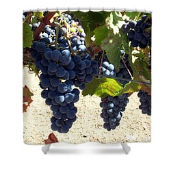 Shower Curtain featuring the photograph Purple Grapes On Vine by Bonnie Muir