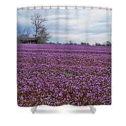 Shower Curtain featuring the photograph Purple Haze by Cricket Hackmann