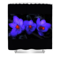 Beautiful Blue Purple Spring Crocus Blooms Shower Curtain by Shelley Neff