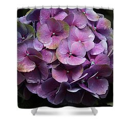 Purple Hydrangea- By Linda Woods Shower Curtain