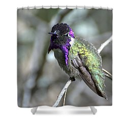 Shower Curtain featuring the photograph Purple Iridescence  by Fraida Gutovich