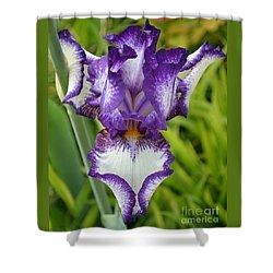 Purple Iris Art Shower Curtain