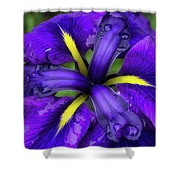 Purple Iris Centre Shower Curtain