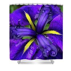 Purple Iris Centre Shower Curtain